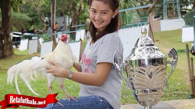 Trik Rahasia Merawat Ayam Sehari Sebelum Tanding